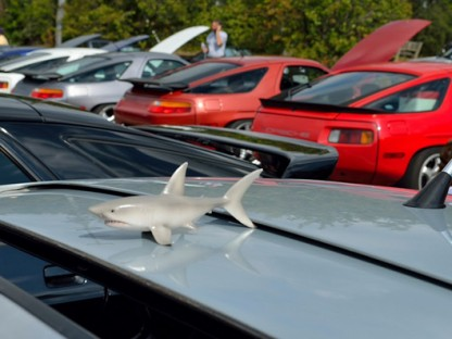 Porsche Shark Enthusiasts Feed at Frenzy