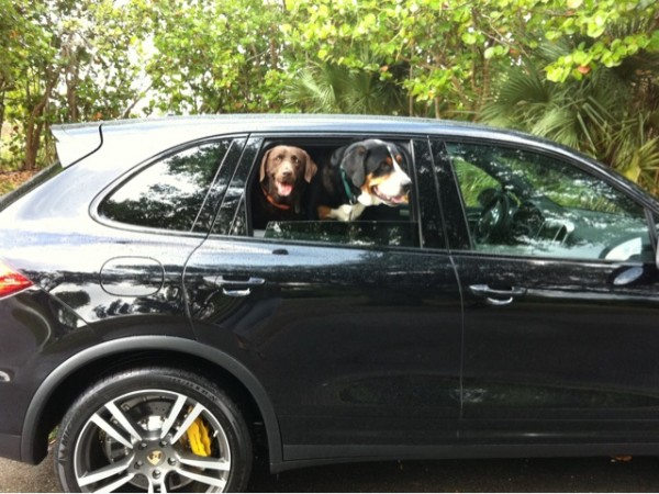 dogs in a 2011 Porche Cayenne