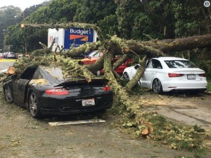 Tree Topples onto Porsche. Driver Trapped Inside.